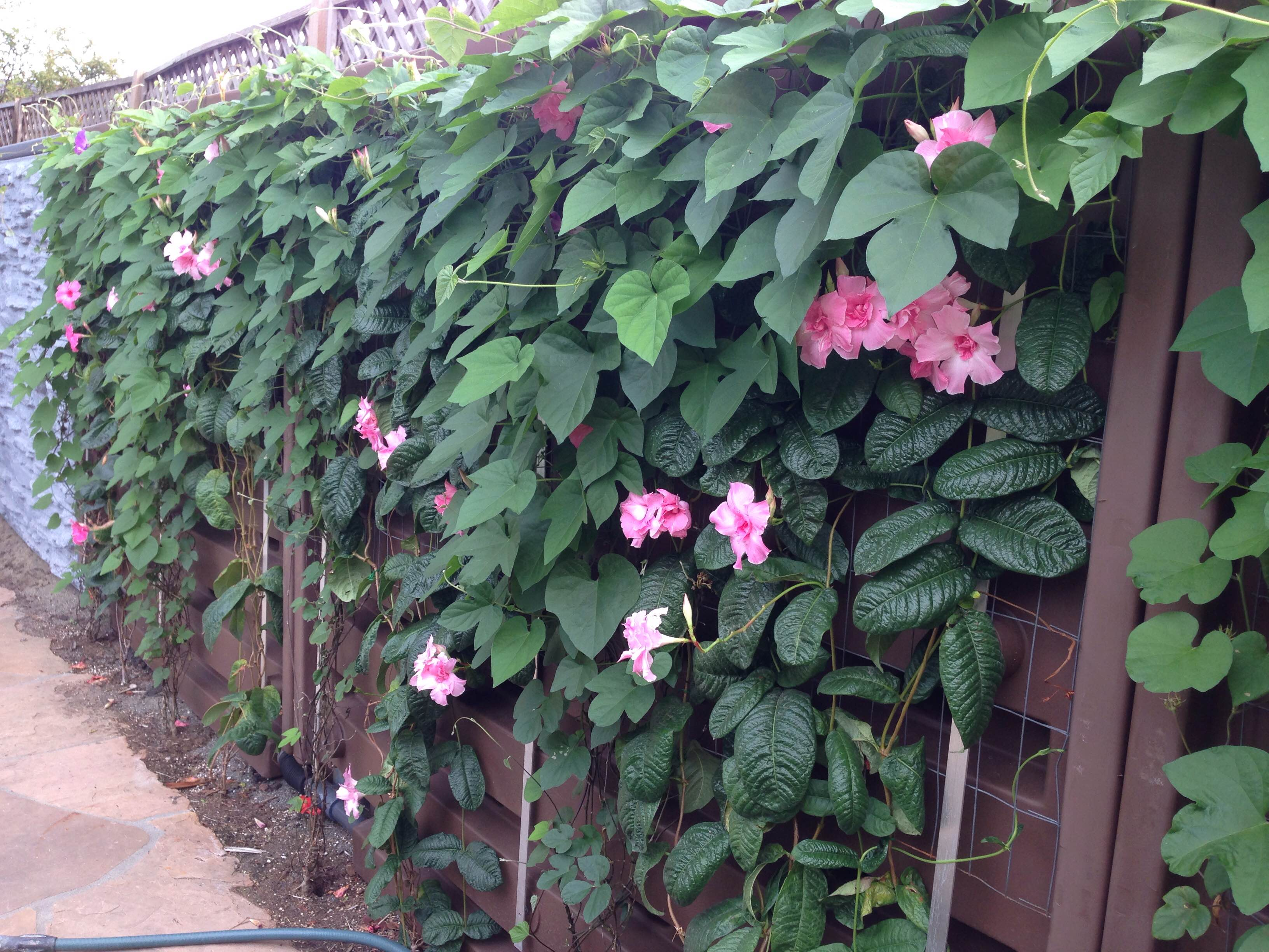 WaterFence Natural Covering - Living Wall