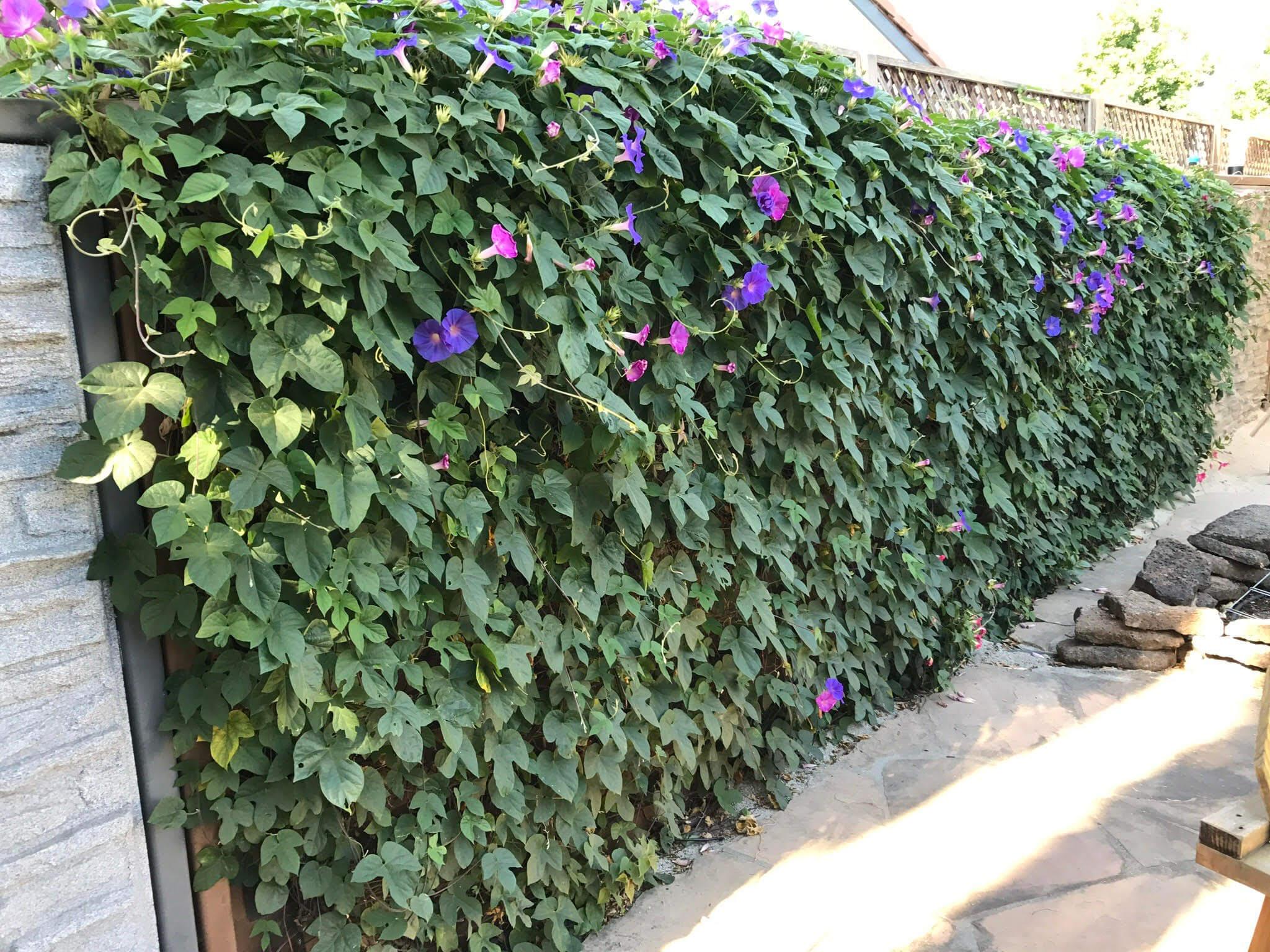 flower wall 2-1-21